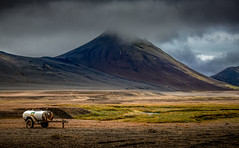 Agriculture in Eastern Iceland