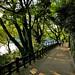 Japan: Okayama, Asahi River lovers' lane by Henk Binnendijk