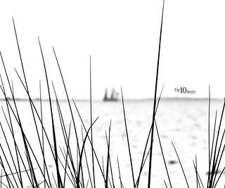 schiff hinter grässern ship behind grases I