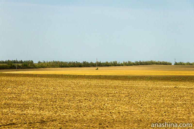 поля, Ростовская область