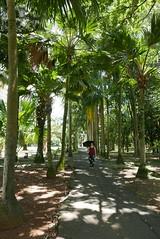 Jardin botanique, Pamplemousses, Mauritius