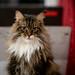 035 - cats cats cats- B9504243