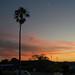 Dawn's lone palm by OzzRod