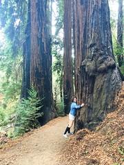 Julia Pfeiffer Burns hiking trail