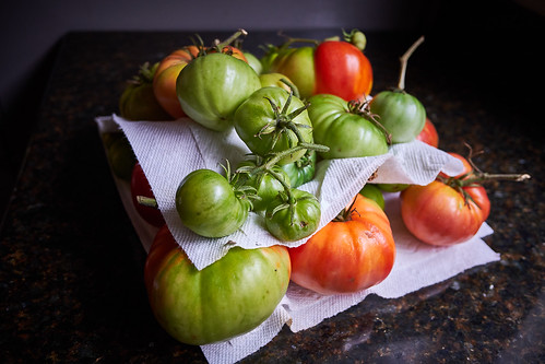 Last of the Garden Tomatoes