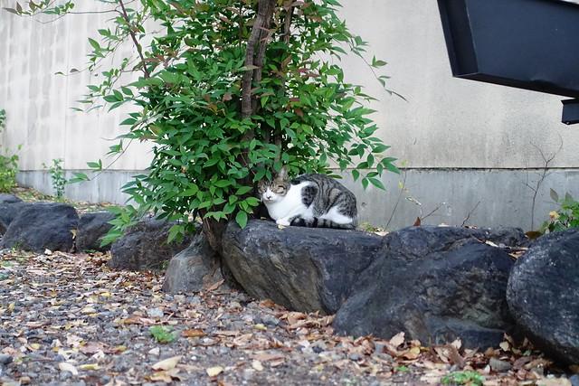 Today's Cat@2018-11-14
