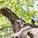 quick perch