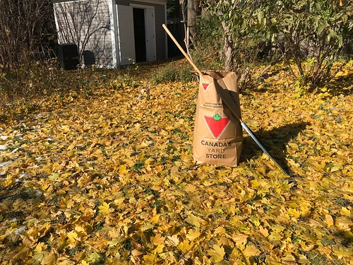 Fall in Ottawa = leaf collection.