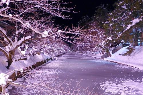冬に咲くさくらライトアップ(見頃前)