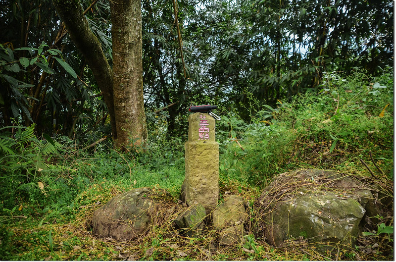 五里埔山冠字補中(13)山字森林三角點(Elev. 560 m)