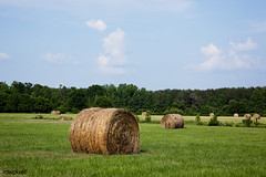 Hay bales dot the landscape of the 69.2 acre farm near Carrollton, Alabama. Original image from Carol M. Highsmith's America, Library of Congress collection. Digitally enhanced by rawpixel.