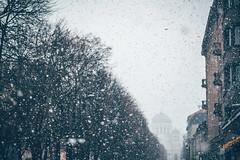 Snowflakes | Kaunas #346/365