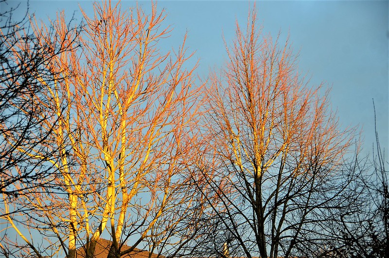 Trees in sunshine 03.01.2019