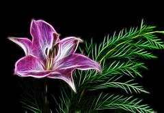 Lily & Ferns