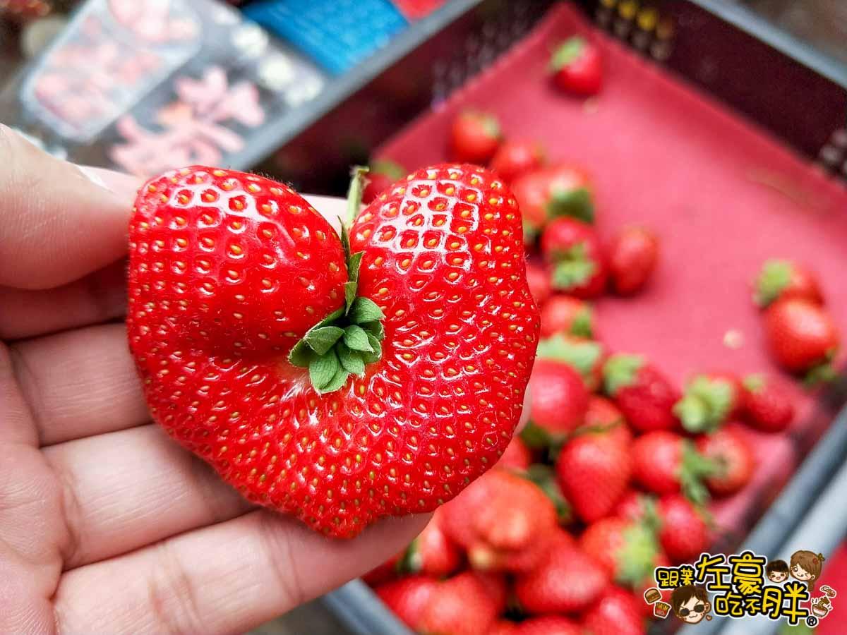 苗栗縣大湖灣潭玫瑰草莓園-1