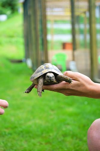 Schildkröte Ebnerbichl