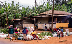 From Ambroseli to Marungu (Tanzania)