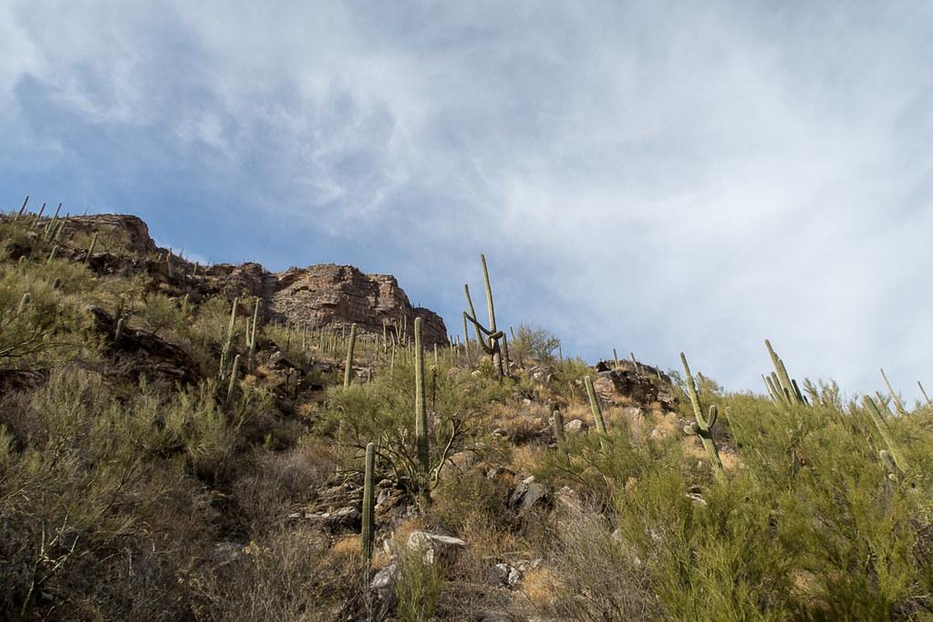 Inside Sabino Canyon in Tucson Arizona