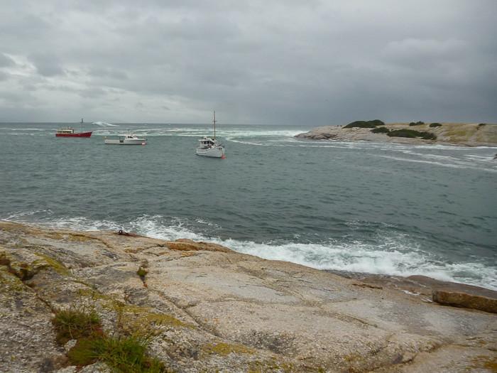 Governor Island - Bicheno