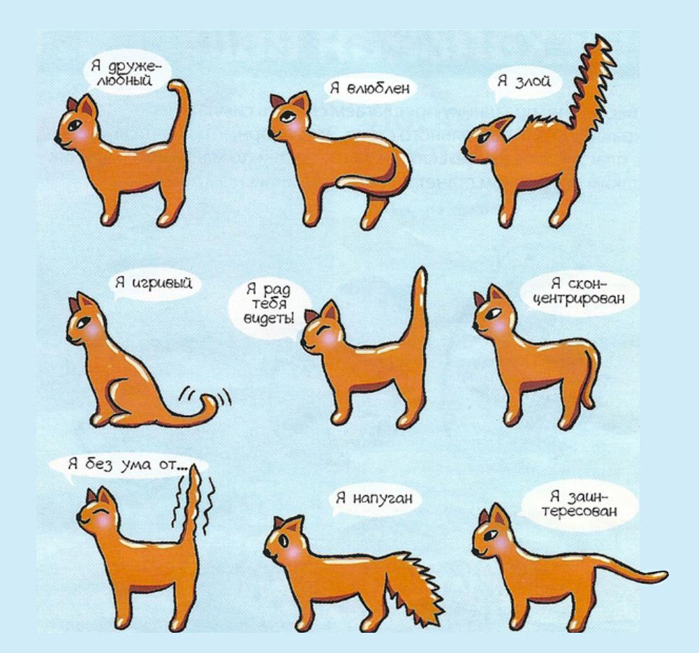 простая схема знаков хвоста у кошек фото