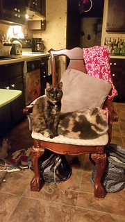 My mama's cats sitting in her chair. So adorbs!! | by bellechienne08