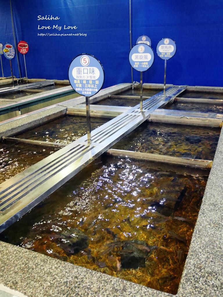 宜蘭礁溪一日遊景點推薦礁溪湯圍溝重口味溫泉魚泡腳魚池 (2)