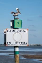 Resume Normal Safe Operation