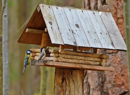 Bird life at the feeder...