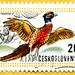 beautiful stamp Czechoslovakia 20h common pheasant (Phasianus colchicus, Fasan, Jagdfasan, faisán común, Faisan de Colchide, Obični fazan, Fácán, fagiano comune, Bażant zwyczajny, Fazan, 雉鸡) Czechoslovakia Briefmarke timbre Ceskoslovensko Tschechoslovakei