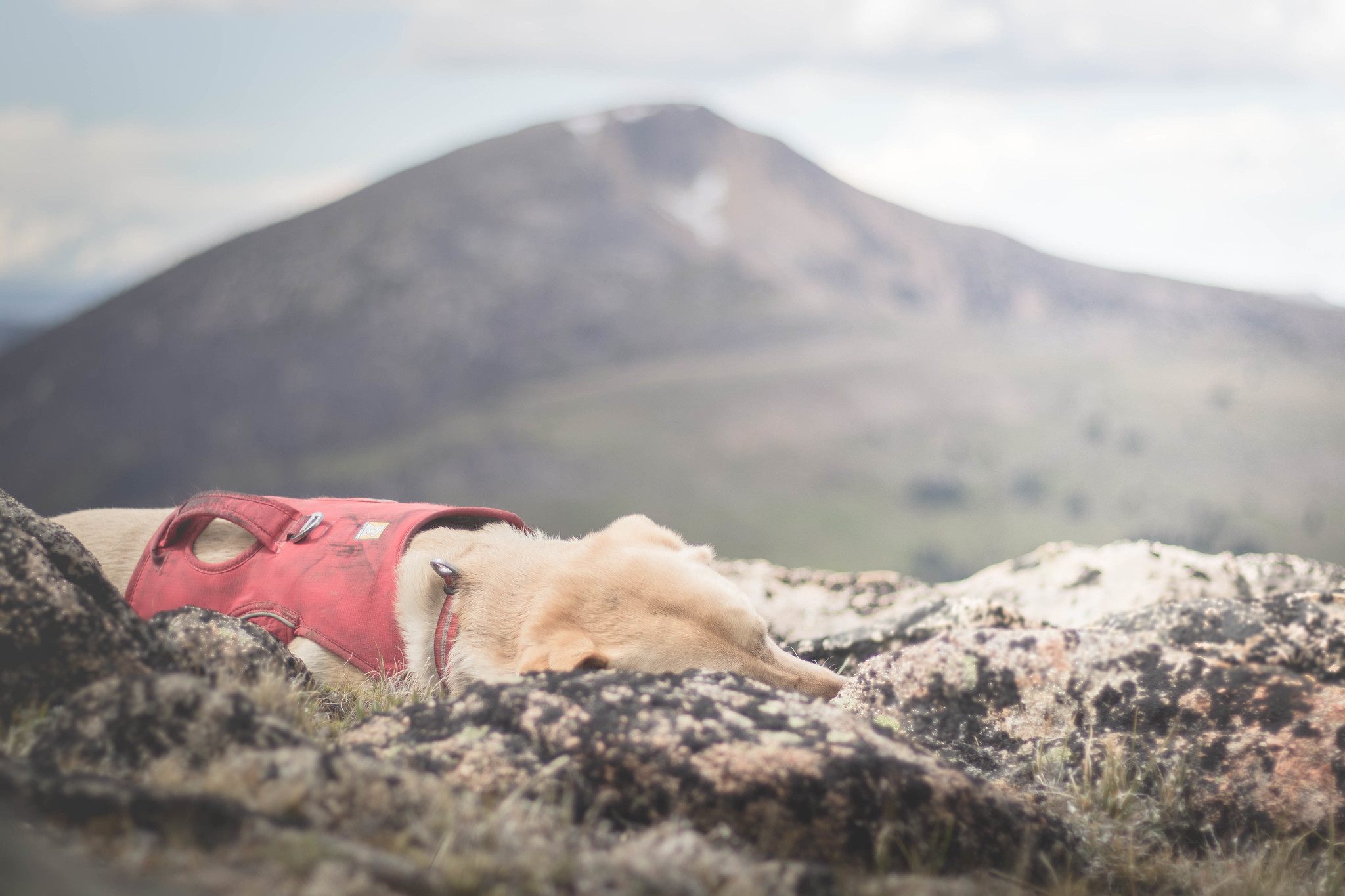 Summit dogs on Gabril Point