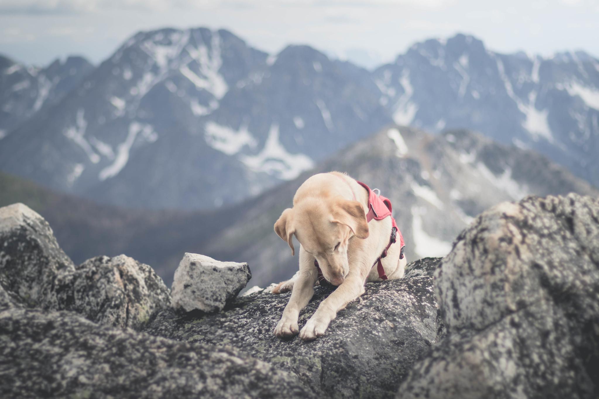 Summit dogs on Fool Hen Southeast
