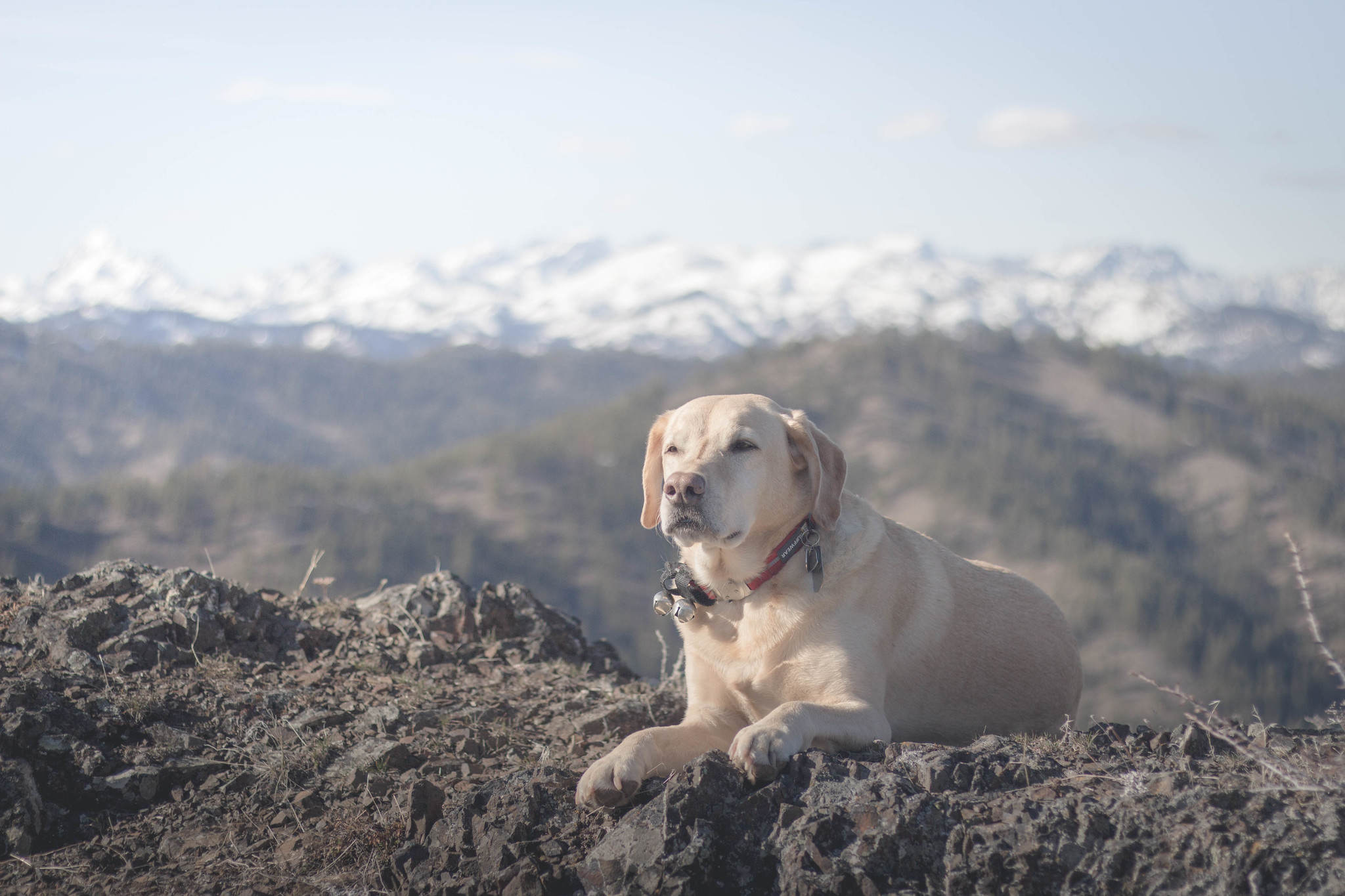 Summit dogs on Flag Mountain
