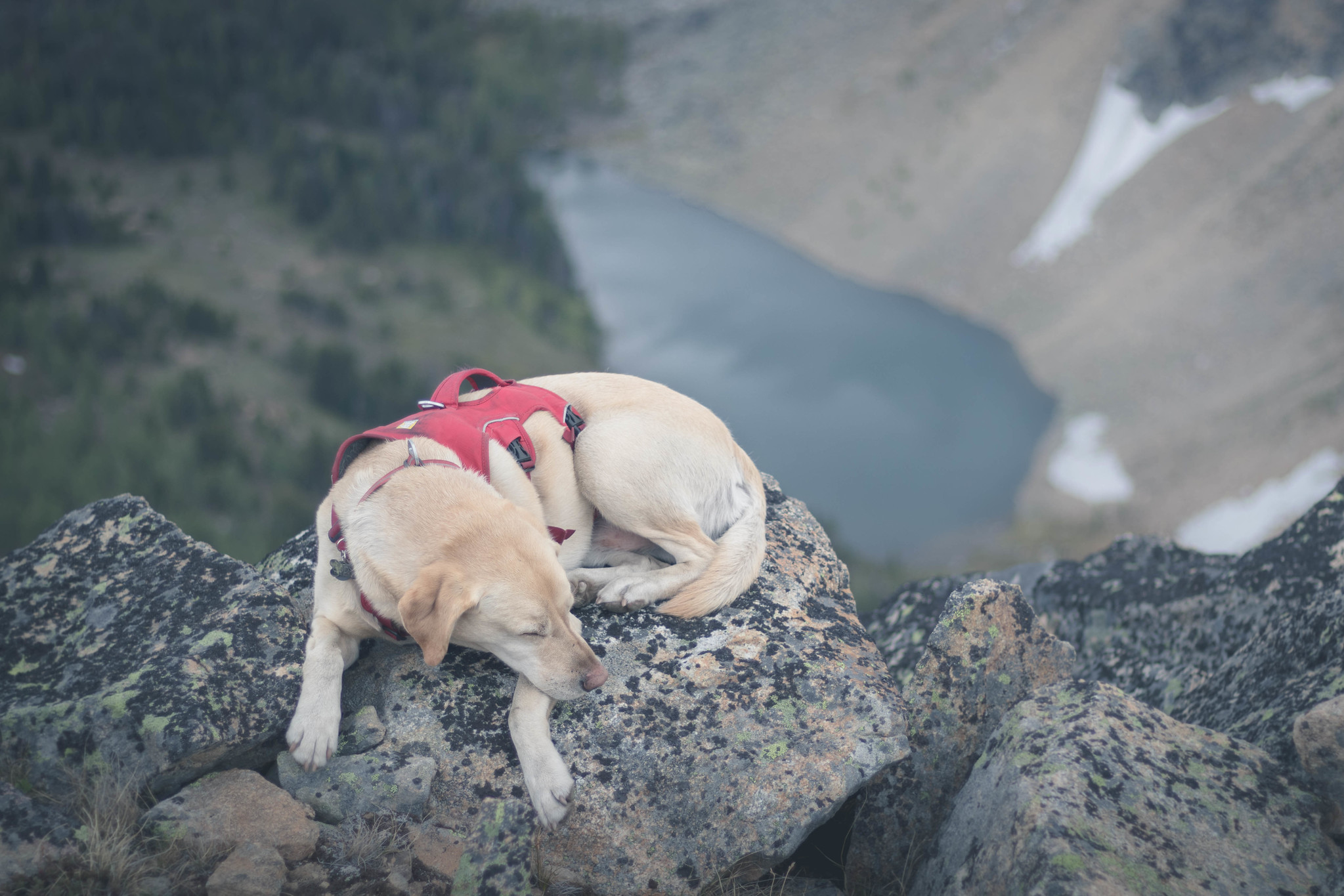 Summit dogs on Sheep Mountain 8274