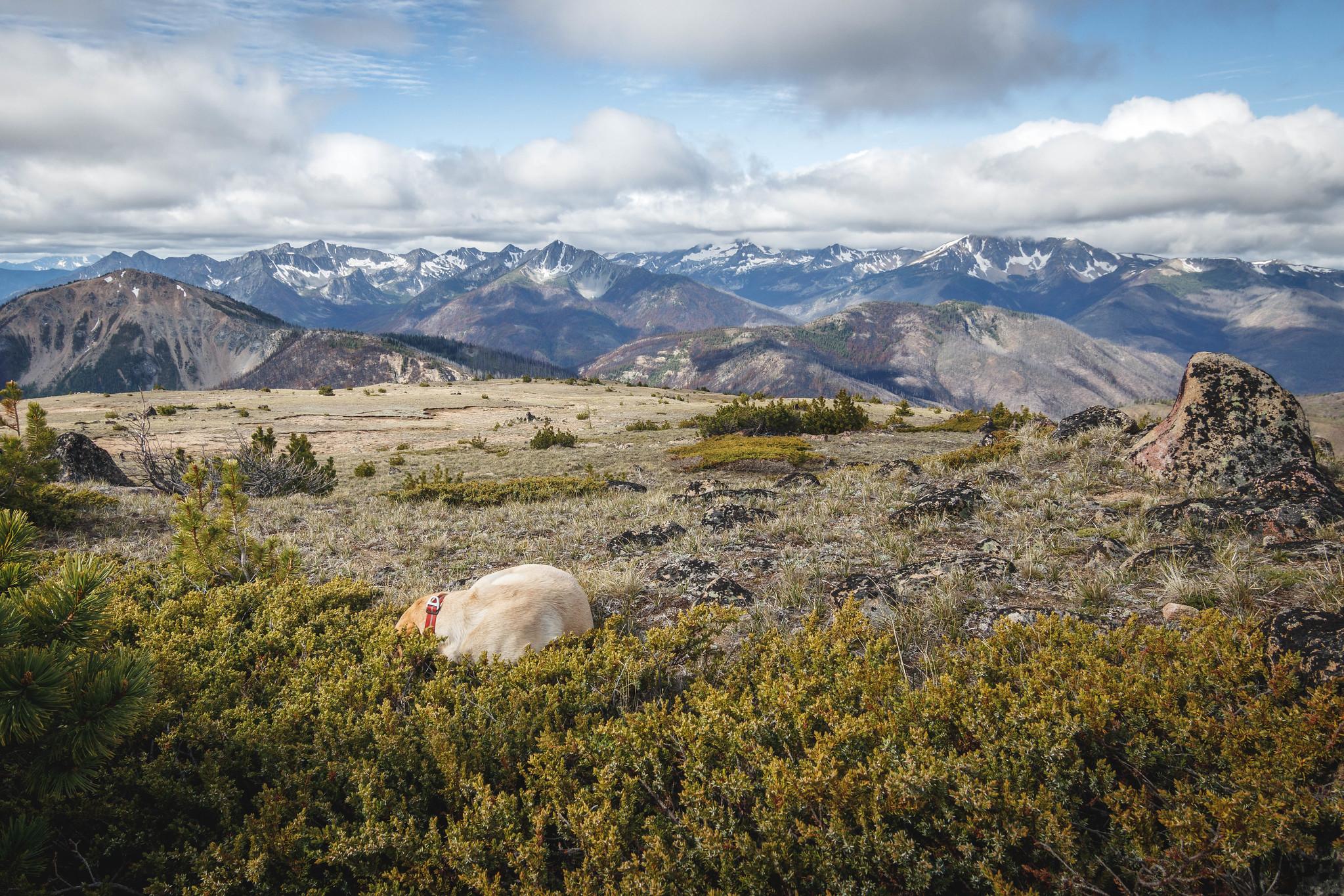 Summit dogs on Ashnola Mountain