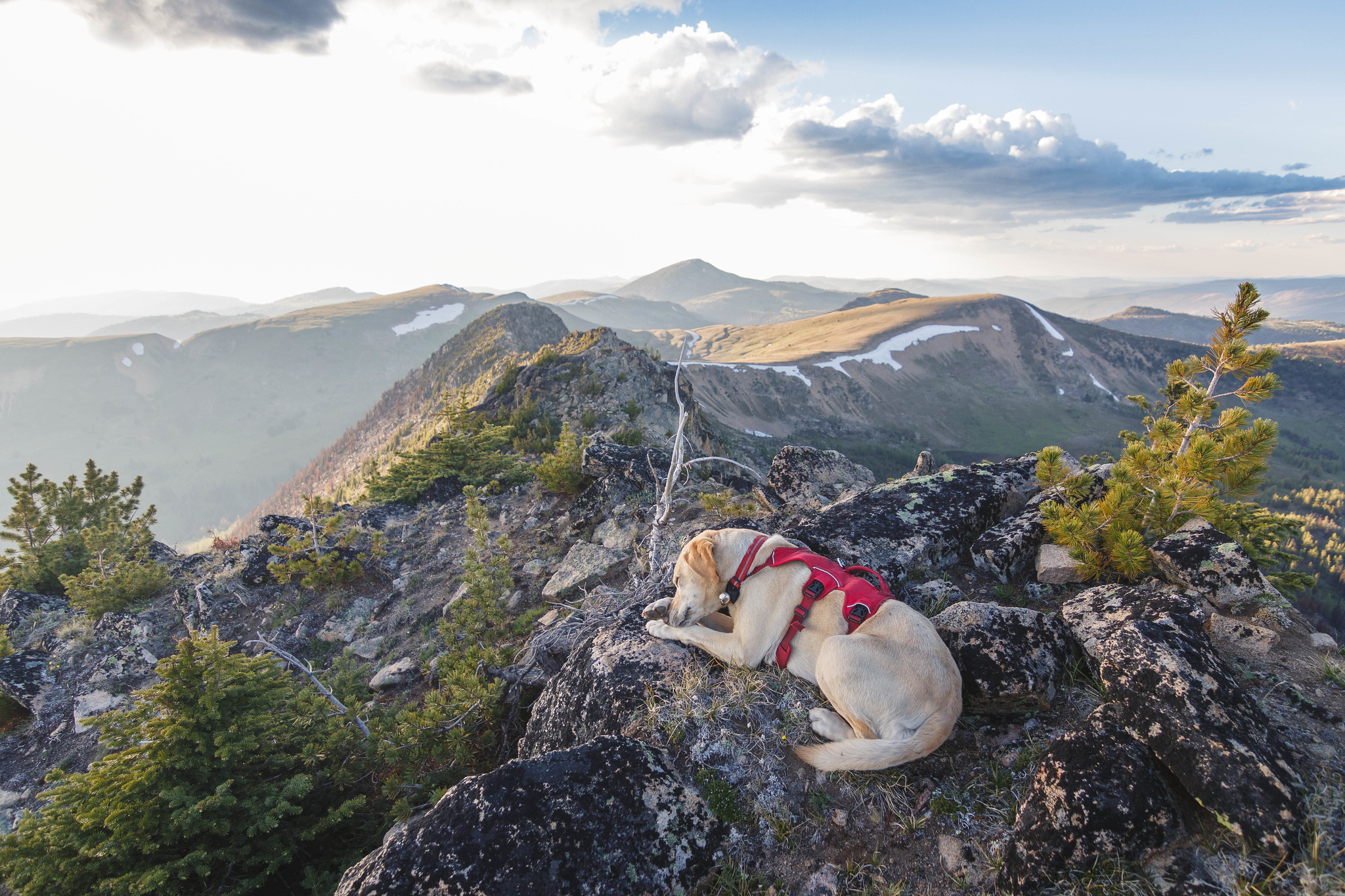 Summit dogs on Corral Peak