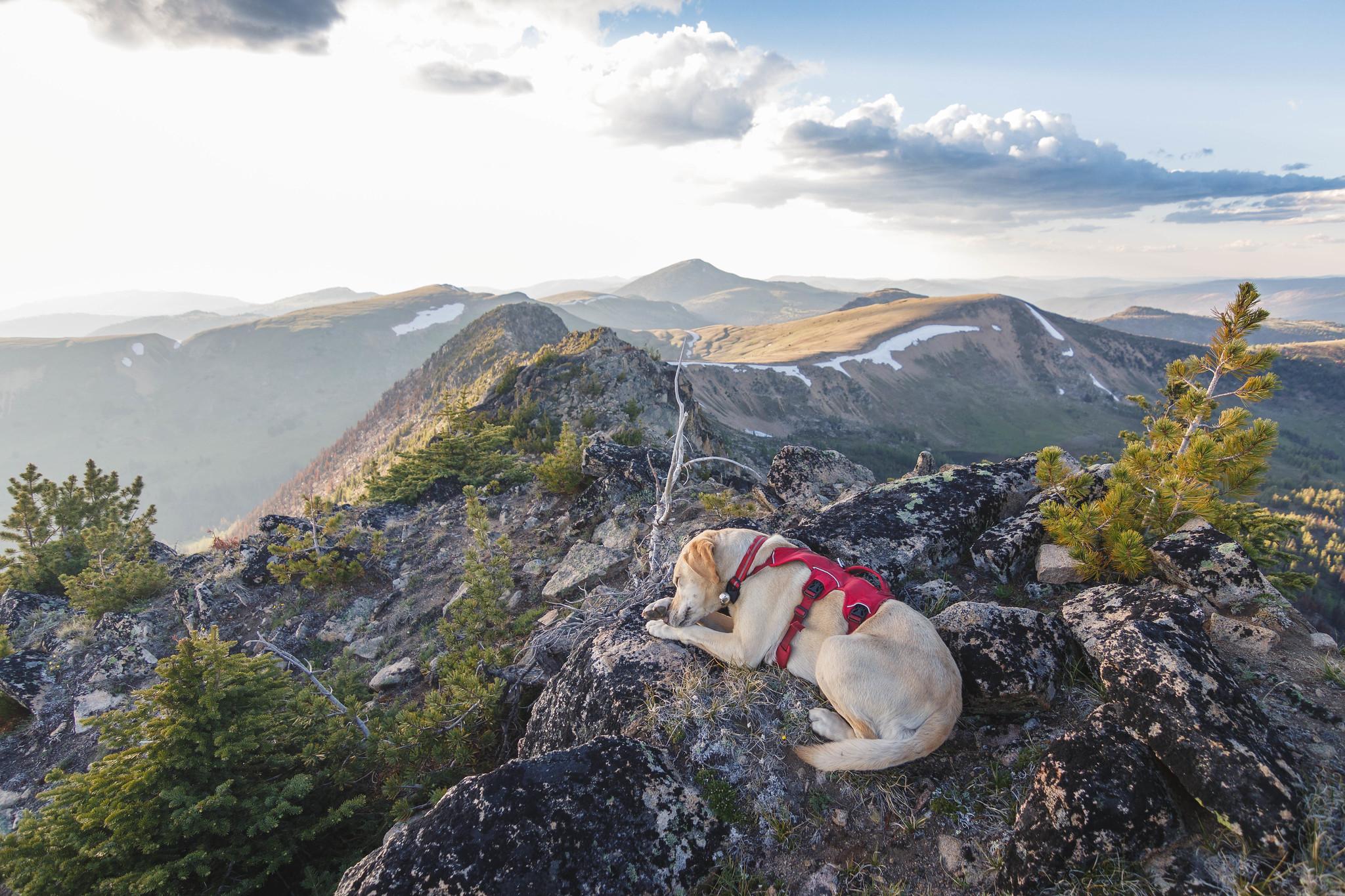 Summit dogs on Corral Peak
